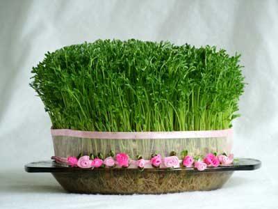 آموزش روش سبز کردن سبزه عید