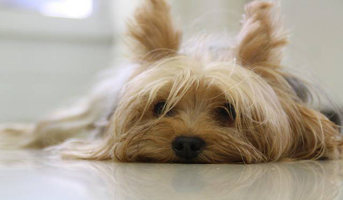اصلاح موی سگ